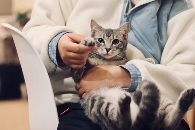 Perito veterinario